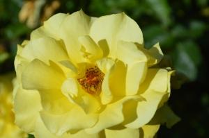 Kwiaciarnia internetowa
